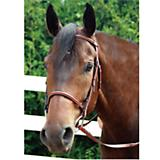 Rodrigo Plain Raised Bridle