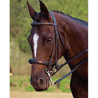 Courbette Weymouth Bridle Oversized