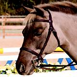 HDR Club Plain Raised Bridle