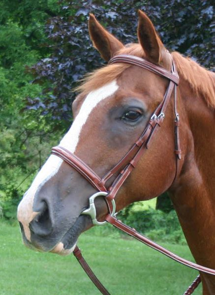 Paris Tack Fancy Crown Padded Bridle Cob Best Price