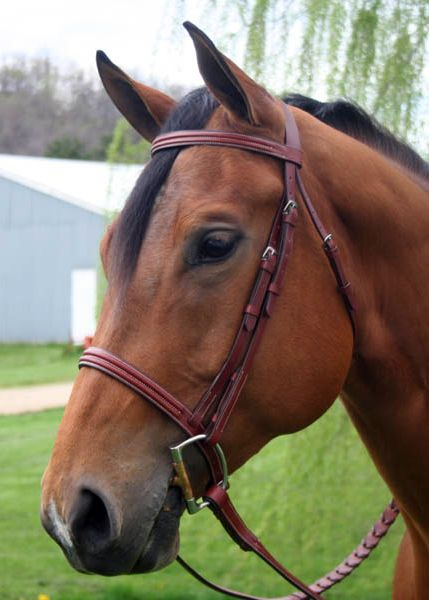 Paris Tack Triple Stitch Bridle Horse Best Price