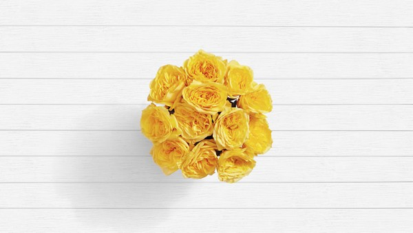 Canary Island - 12 Stems of Yellow Garden Roses