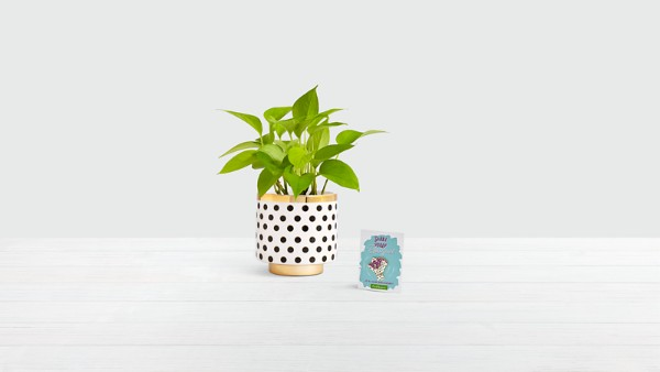 Neon Lights with Limited Edition 20th Birthday Planter & Enamel Pin