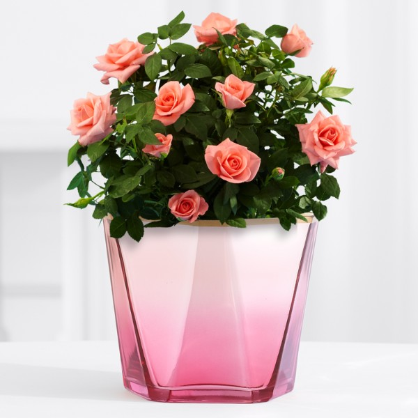 Potted Pink Rose in Pink Iridescent Glass