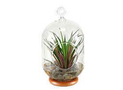 Small Hanging Terrarium