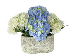 Blue and White Hydrangeas in Ceramic Pot
