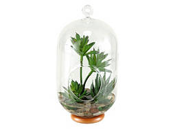 Medium Hanging Terrarium