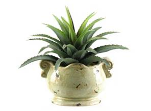 Silk Plants »