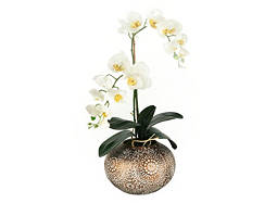 White Orchids in Ceramic Pot