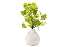 Snowball and Gingko in White Pot