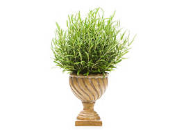 Topiary Ball in Tuscan Vase