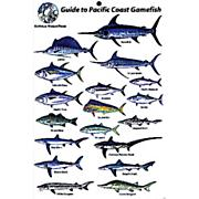 Gamefish Of The Pacific Coast