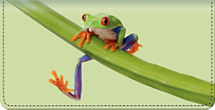 Froggy Fun Checkbook Cover
