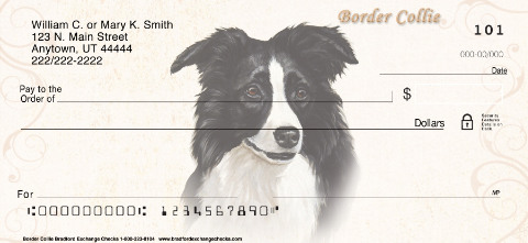 Border Collie Portrait Paintings