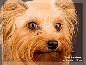 Faithful Friends - Yorkie Note Cards