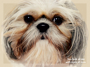 Faithful Friends - Shih Tzu Note Cards