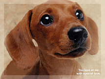 Faithful Friends - Dachshund Notecards