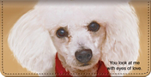 Faithful Friends - Poodle Checkbook Cover