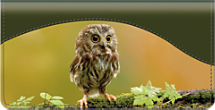 Baby Owls Checkbook Cover