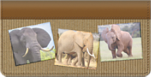 Elephants Checkbook Cover