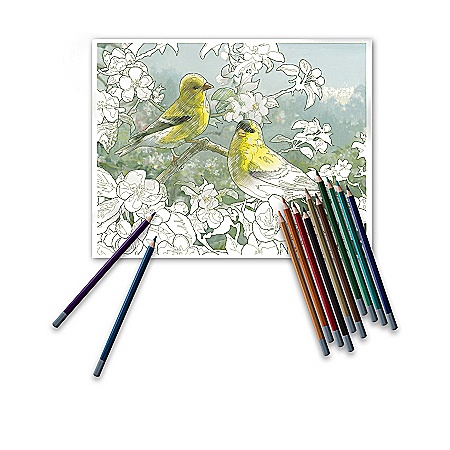 Hautman Brothers Adult Coloring Kit Collection With Pencils