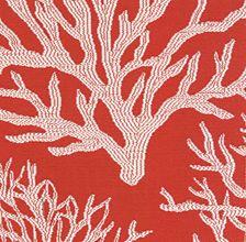 Coral Sea Tangerine