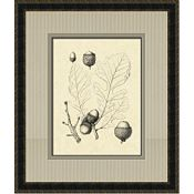 Antique Oak Leaves I