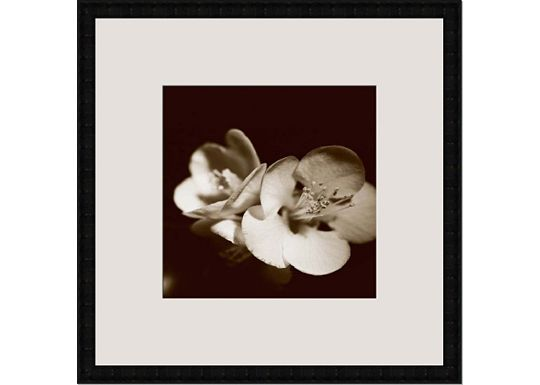 Accessories - Sepia Quince Blossoms IV