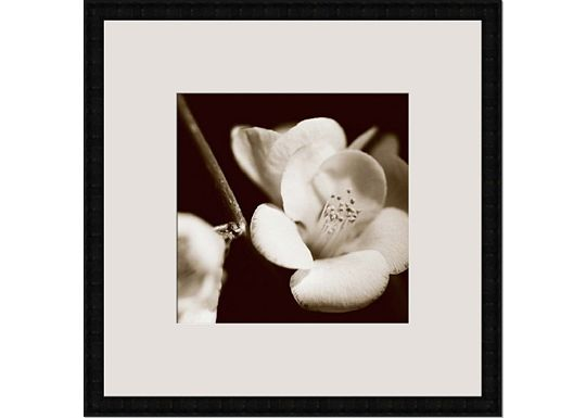 Accessories - Sepia Quince Blossoms V