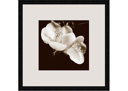 Accessories - Sepia Quince Blossoms VI
