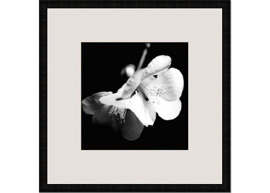 Accessories - New Image Sepia Quince Blossoms I