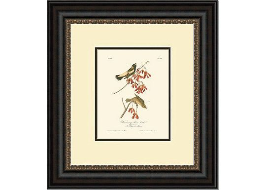 Accessories - Set of 4 19x22 Bird Prints