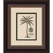 Coconut Palm - Sepia