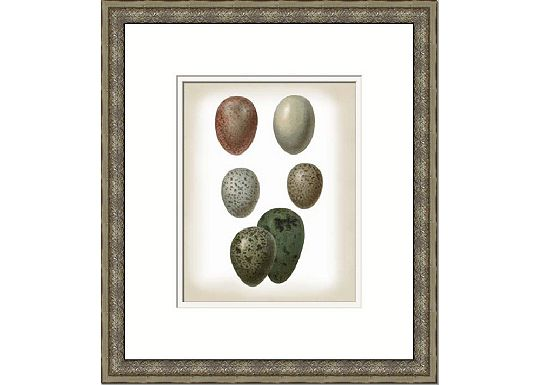 Accessories - Vision Studio Bird Egg Study V & VI