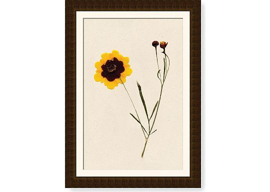 Accessories - Coreopsis Stalks
