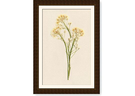 Accessories - Alyssum
