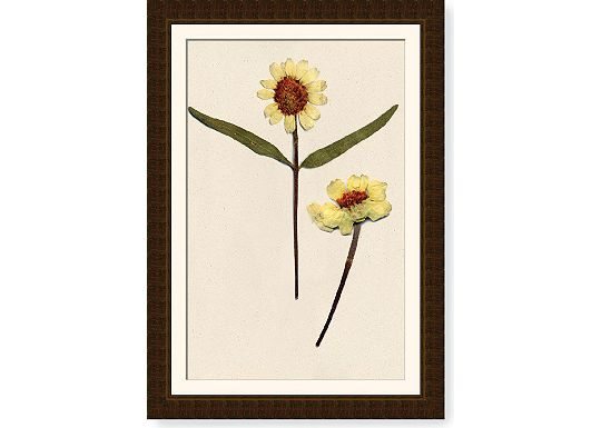 Accessories - Zinnia Stalk I