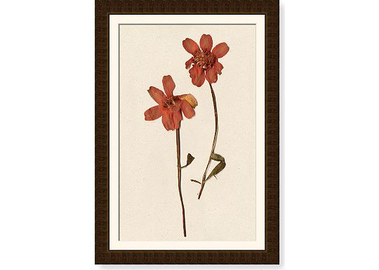 Accessories - Larkspur Stalk