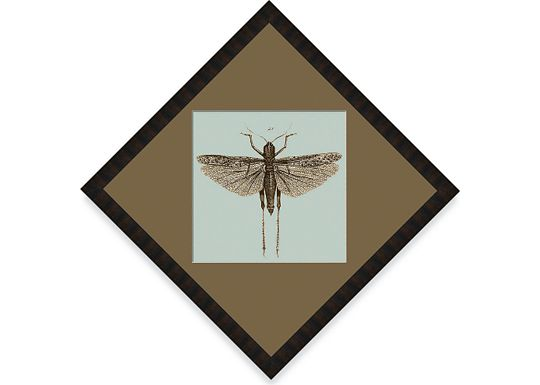 Accessories - Dragonfly #18