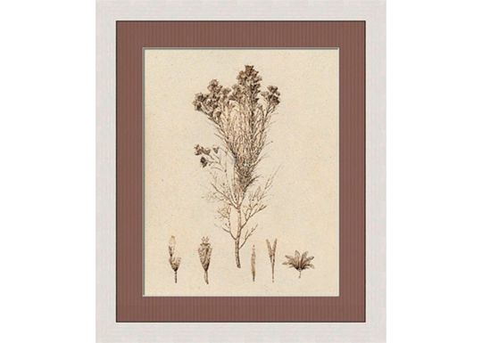 Accessories - Sepia Line Plants II