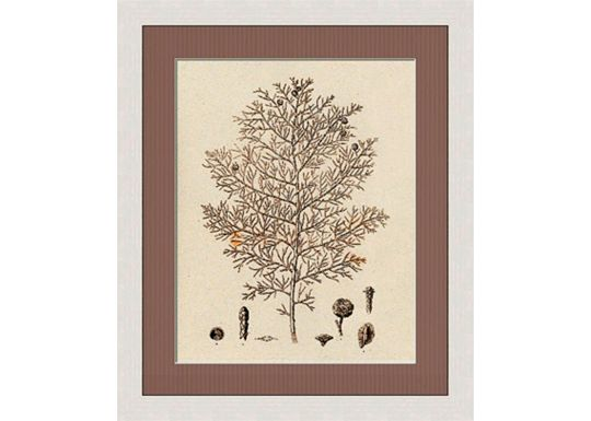 Accessories - Sepia Line Plants III