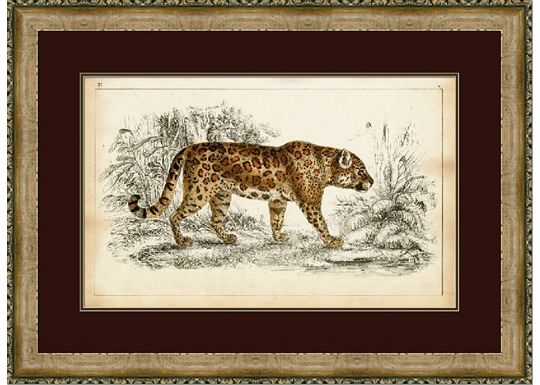 Accessories - Naturalist Cheetah