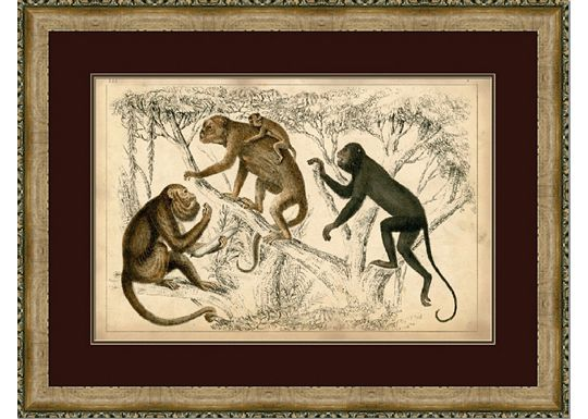Accessories - Naturalist Monkeys