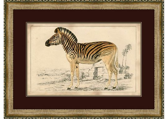 Accessories - Naturalist Zebra I
