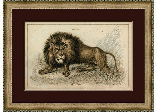 Accessories - Naturalist Lion