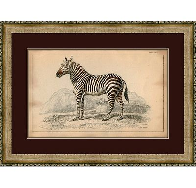 Accessories - Naturalist Zebra II