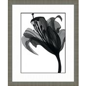 Black and White Watercolor Flowers B