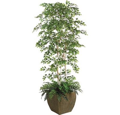 Accessories - Sherman Birch Tree in Container