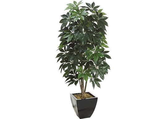 Accessories - Schefflera Tree in Container