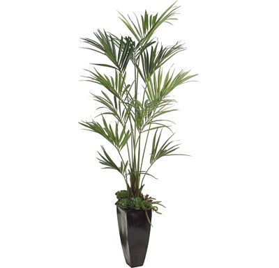 Accessories - Kentia Palm in Fiberglass Container
